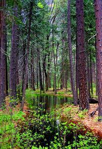 Forest Photograph - Enchanted Forest by Sindi June Short
