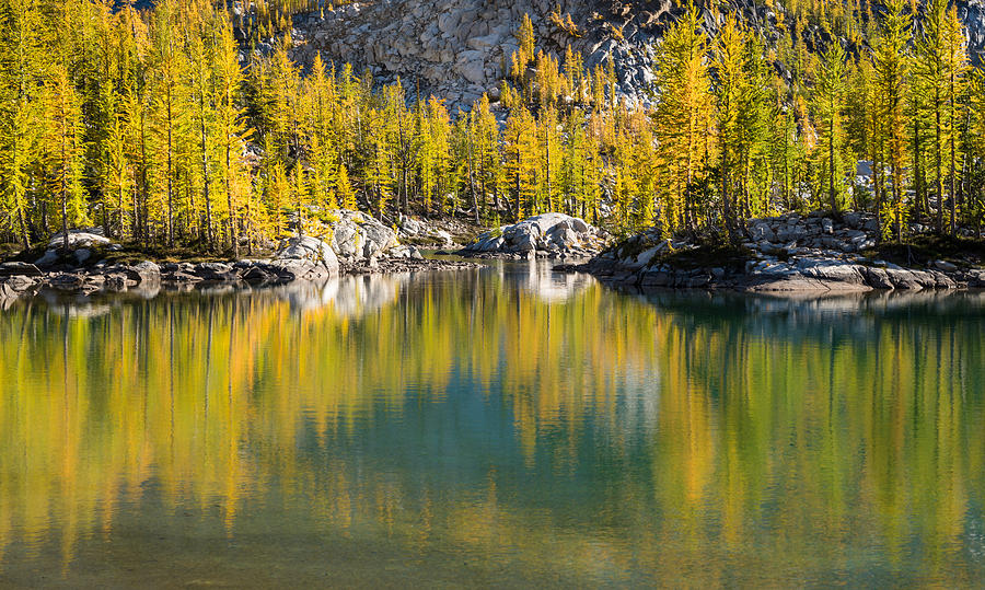 Enchanted Larches by Brian Bonham