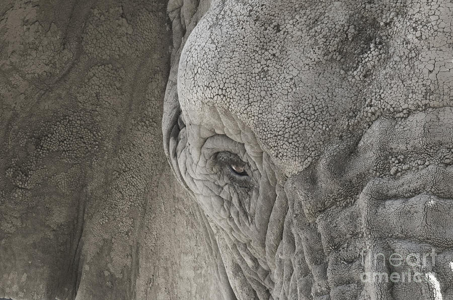 Elephant Photograph - Enchanting Elephant  by Tabitha Fox