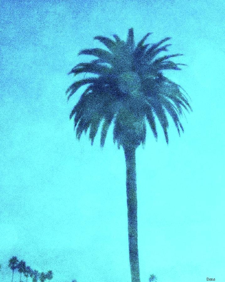 Encinitas Photograph - Encinitas Palm by Dana Peters-Colley