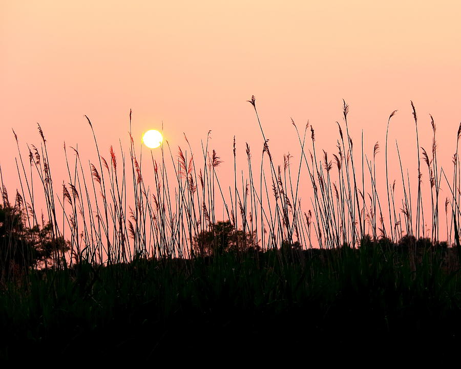 Sunset Photograph - End Of Day by Laurie Breton