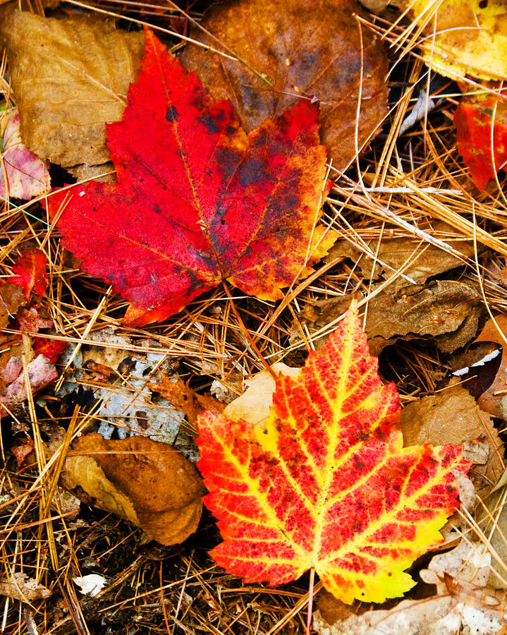 Fall Photograph - End Of Fall by Bob Bailey