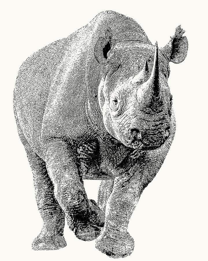 Rhinoceros Photograph - Endangered Black Rhino, Full Figure by Scotch Macaskill