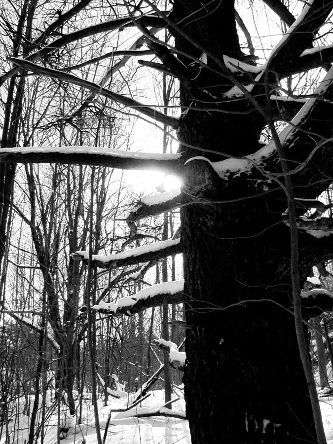 Old Tree Photograph - Endurance by Douglas Pike