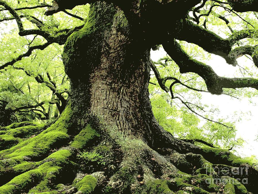 Tree Photograph - Endurance In Japan - Digital Art by Carol Groenen
