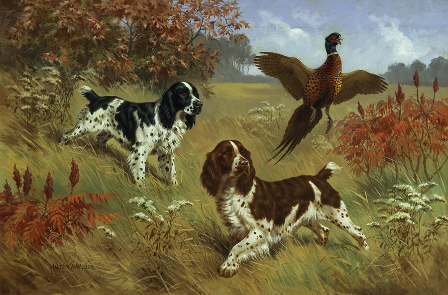 Illustration Photograph - Energetic English Springer Spaniels by Walter A. Weber