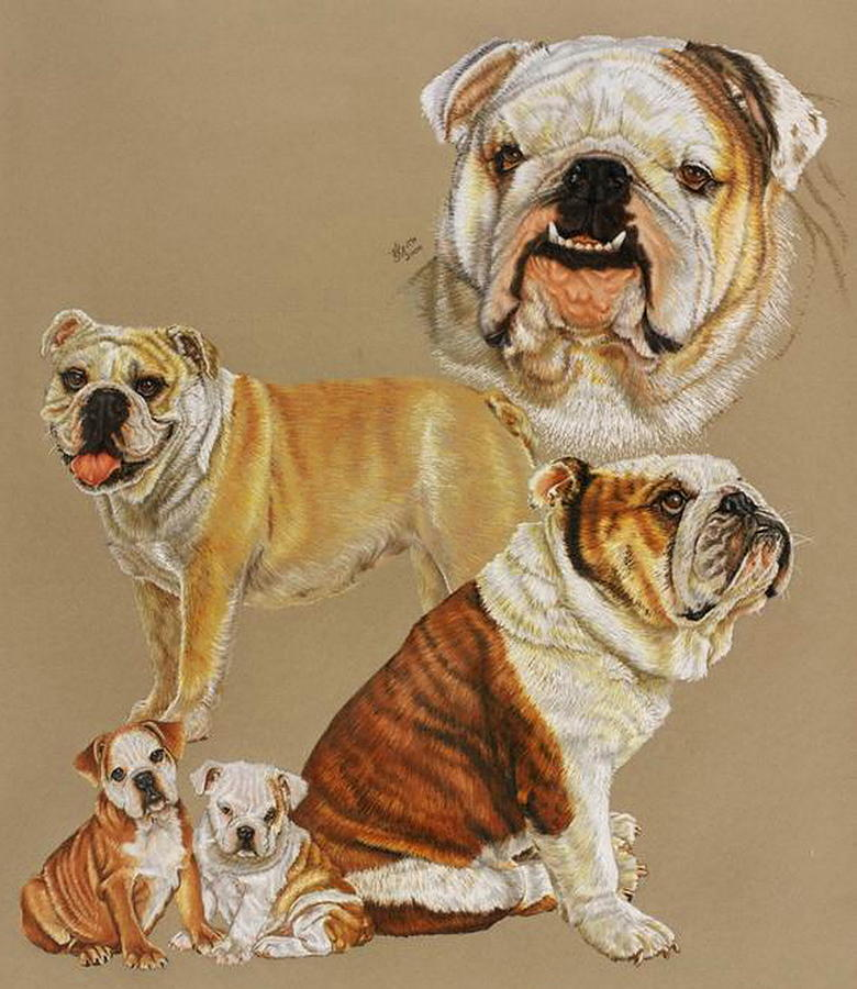 English Bulldog Drawing by Barbara Keith