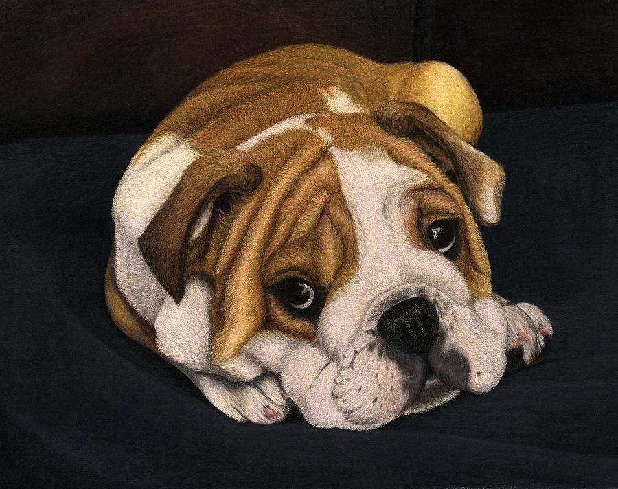 English Bulldog Puppy Drawing by Corrina Thurston