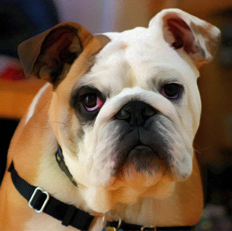 English Bulldog Painting - English Bulldog by Vincent Monozlay