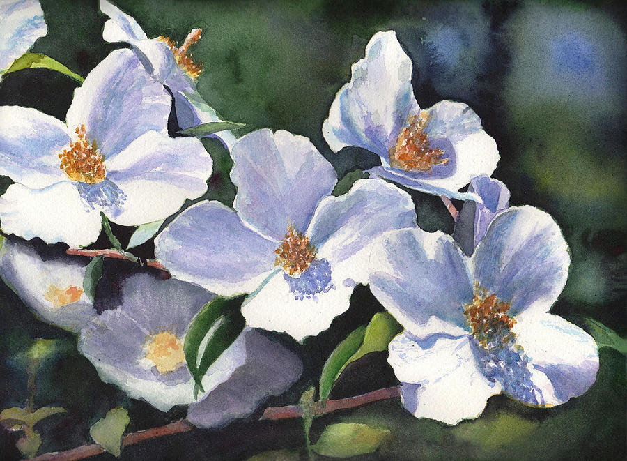 Watercolor Painting - English Dogwood by Kathy Nesseth