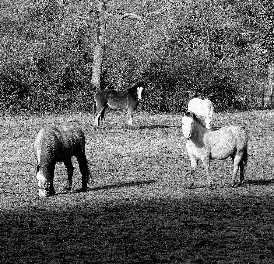 English Horses by Jenny Mead