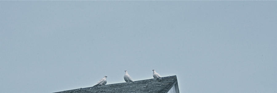 Birds Photograph - English Rest by Joshua Ackerman