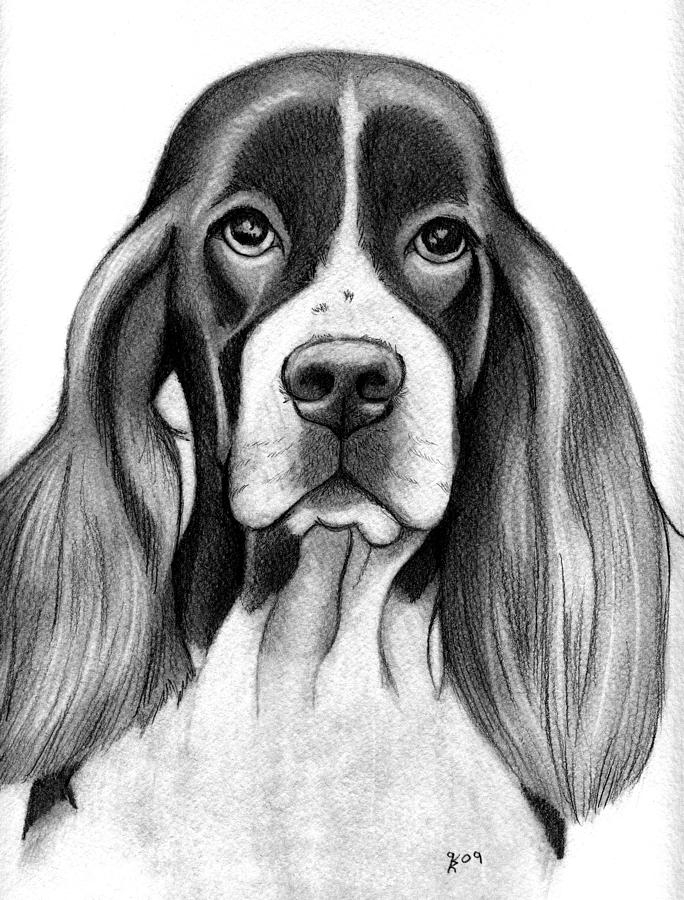 Dog Portraits Drawing - English Springer Spaniel by Katy Ryan