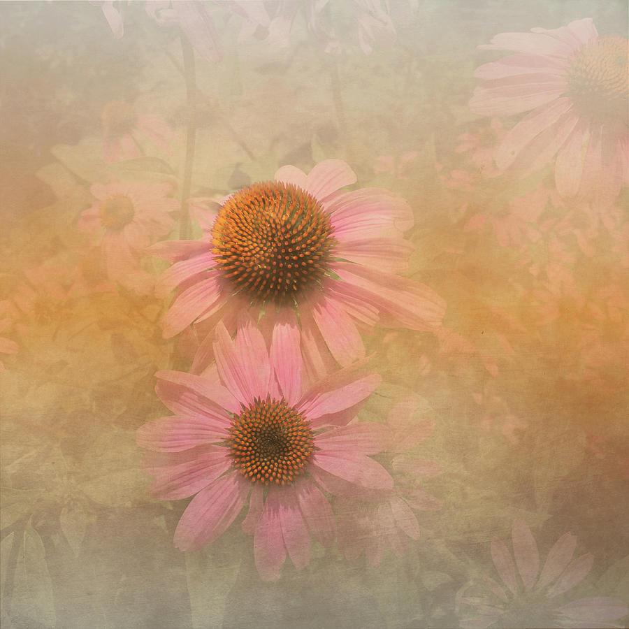 Daisy Photograph - Enhanced Conehead Daisy by Arlene Carmel