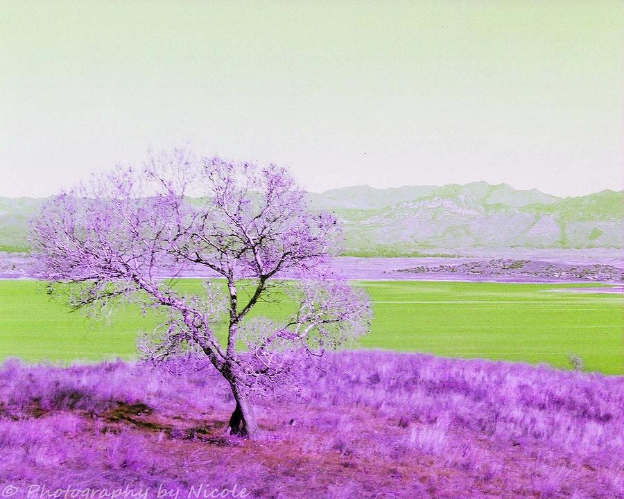 Enhanced Photograph - Enhanced Lake Henshaw by Photography by Nicole
