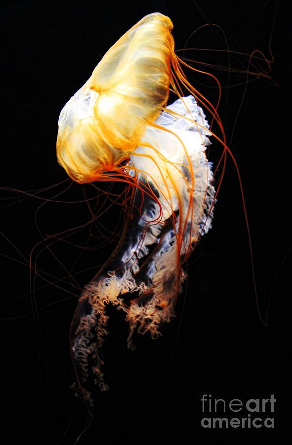 Animal Photograph - Enigma by Andrew Paranavitana