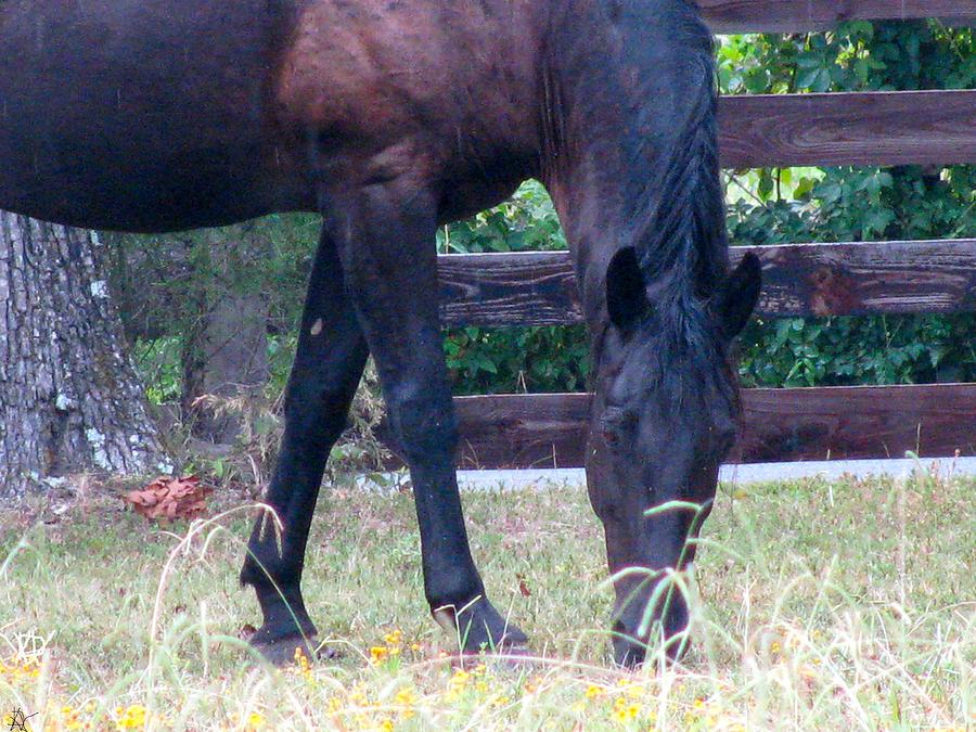 Wonder Horse Photograph - Enjoying The Day by Debra     Vatalaro