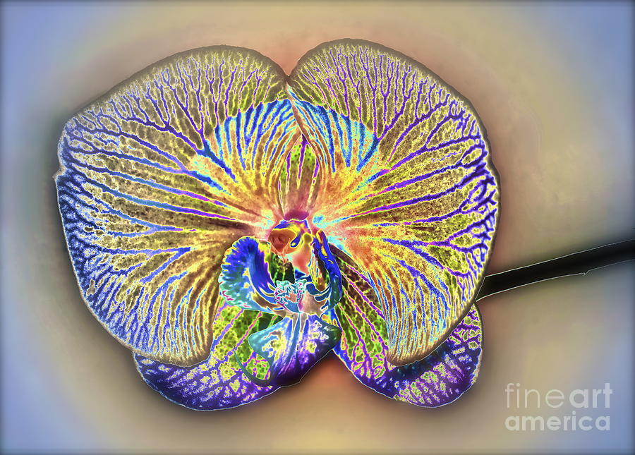 Orchid Photograph - Enlightened Orchid by Gwyn Newcombe