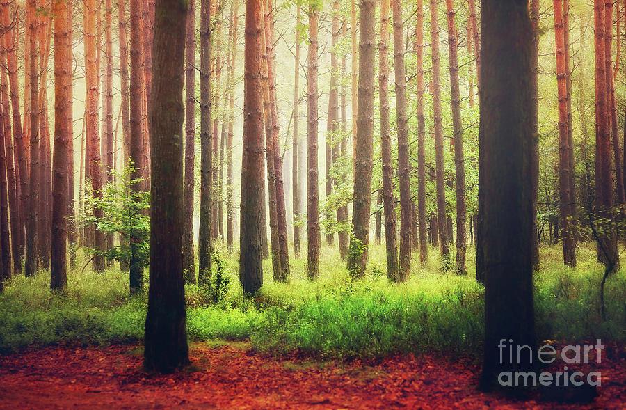 Enlightened Trees... Photograph