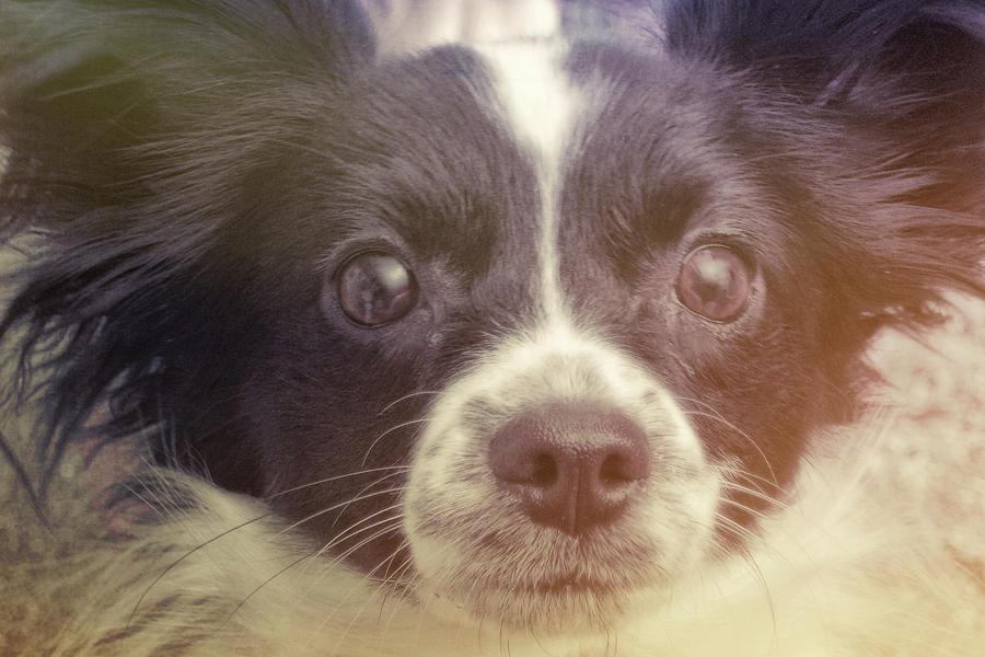 Dog Photograph - Ennis by JAMART Photography