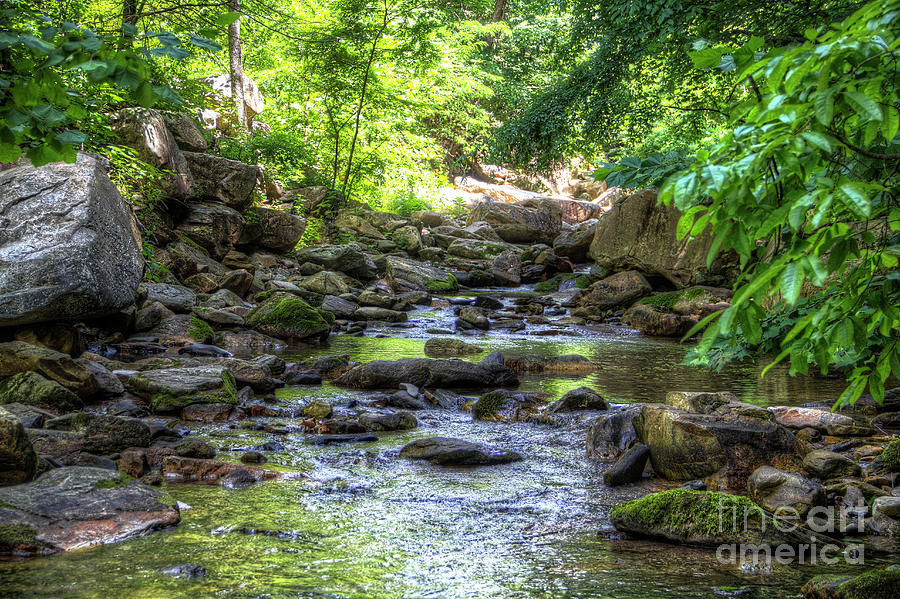 Forest Photograph - Eno River by James Foshee