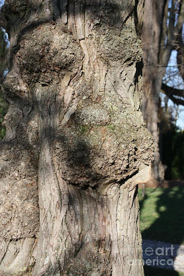 Trees Photograph - Ent Face by James E Weaver