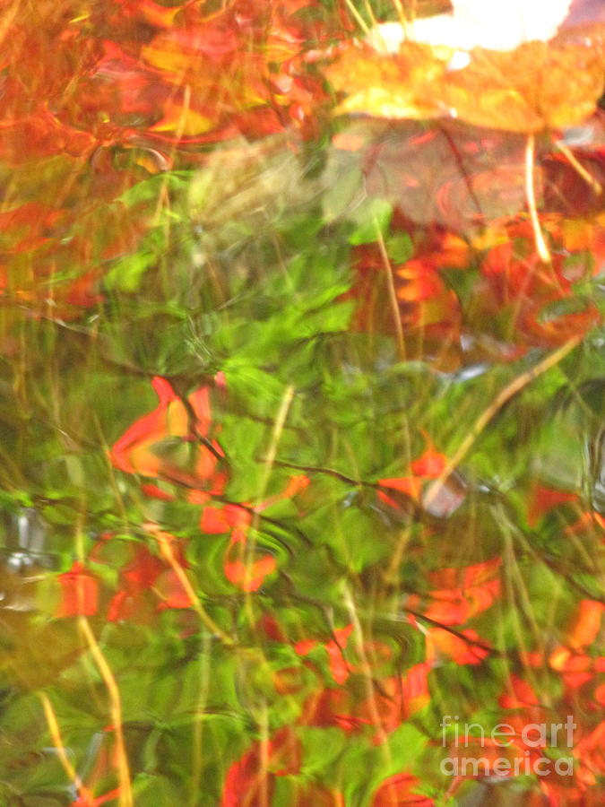 Abstract Photograph - Entangled Adrift by Sybil Staples