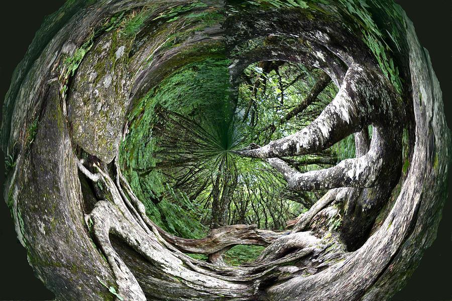Enter The Root Cellar Photograph