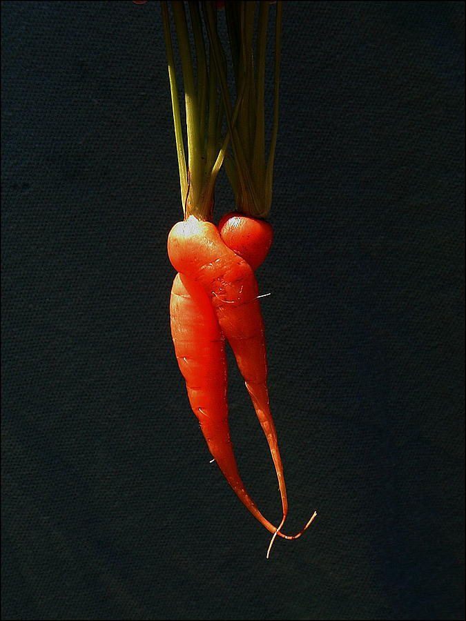 Vegetable Photograph - Entwined Carrots by Mark Stevenson
