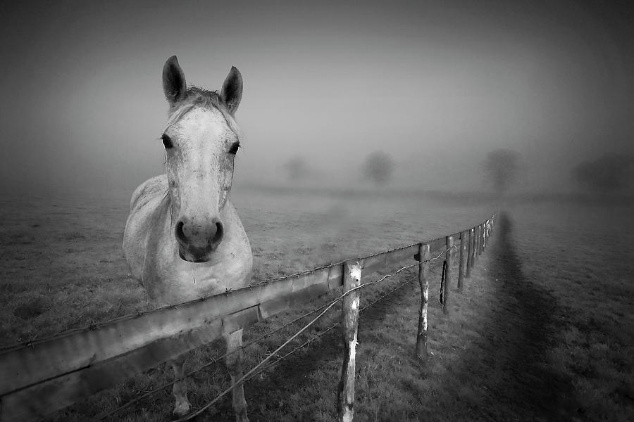 Horizontal Photograph - Equine Fog by Taken with passion