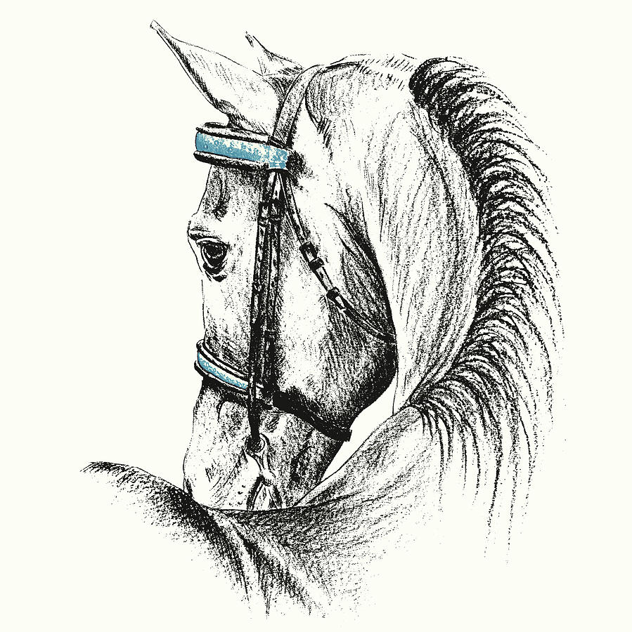 Horse Photograph - Equine Sketches by JAMART Photography