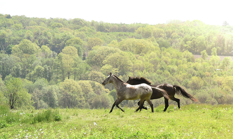 Equines For Freedom Photograph by Yvonne Orlandini