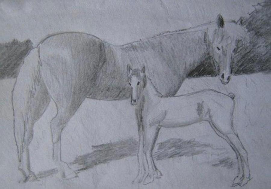 Horse Drawing - Equus Caballus by SAIGON De Manila