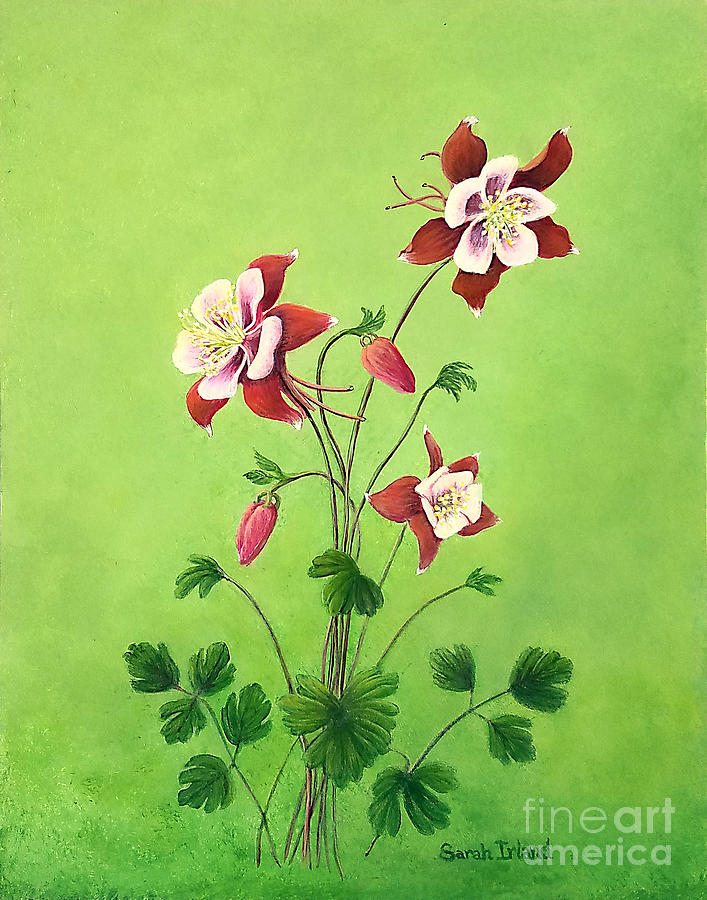 Eastern Red Columbine by Sarah Irland