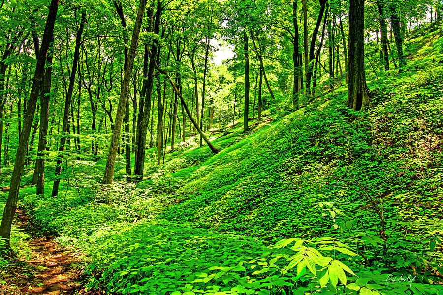 Escarpment Glade Photograph
