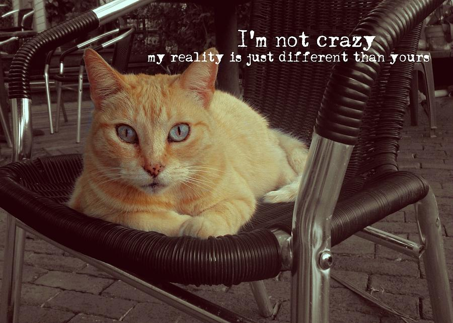 Cat Photograph - Esmeralda Quote by JAMART Photography