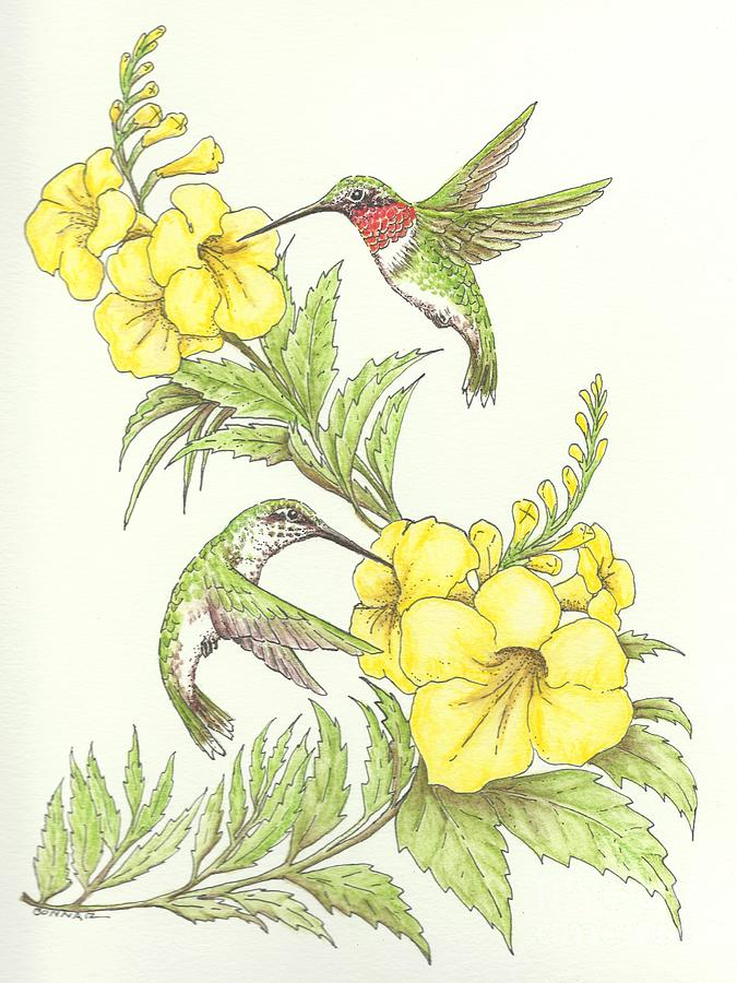 Ruby Throated Hummingbird Drawing - Esperanza Duet by Sue Bonnar