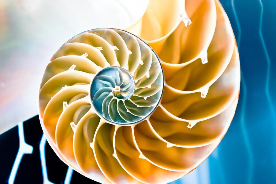 Eternal Golden Spiral by Colleen Kammerer