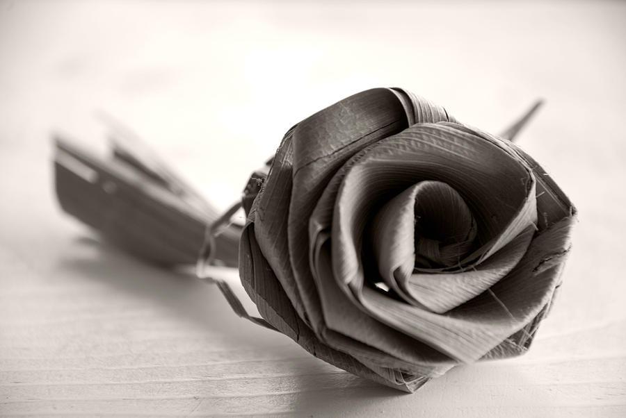 Eternal Rose in Sepia by Beverly Stapleton
