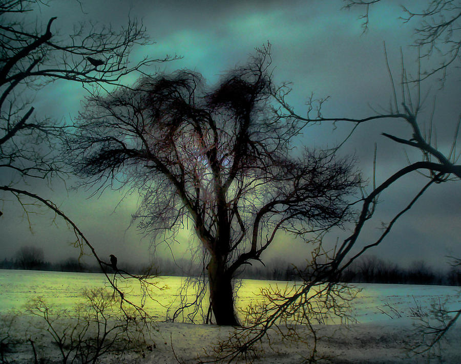 Blue Photograph - Ethereal Trees by Gothicrow Images