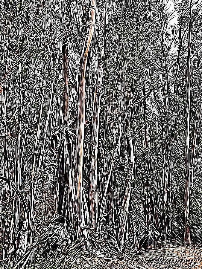 Eucalyptus  by Bridgette Gomes