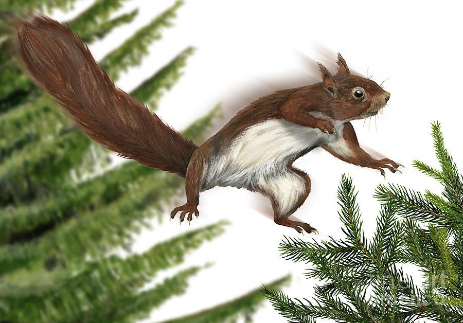 Eurasian Red Squirrel Sciurus Vulgaris - Ecureuil Roux - Ardilla Roja - Eichhoernchen - Eekhoorn Painting
