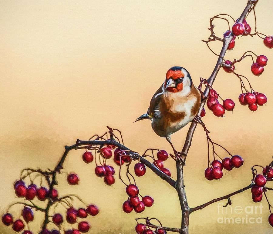 European Goldfinch with berries by Liz Leyden