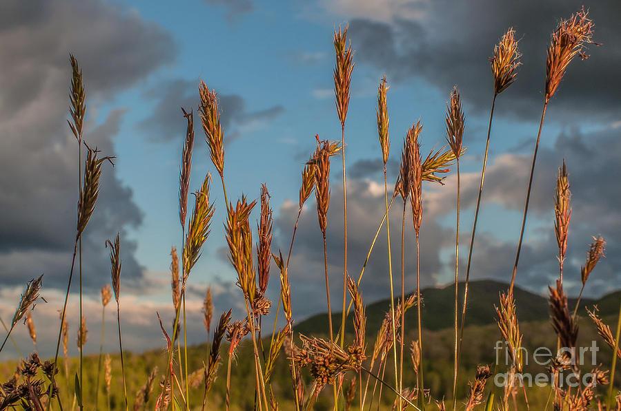 Landscape Photograph - Evening Choir by Lyudmila Prokopenko