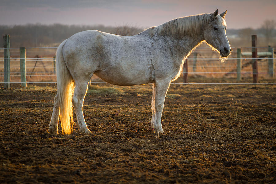 Evening Glow This Old Horse by Toni Thomas
