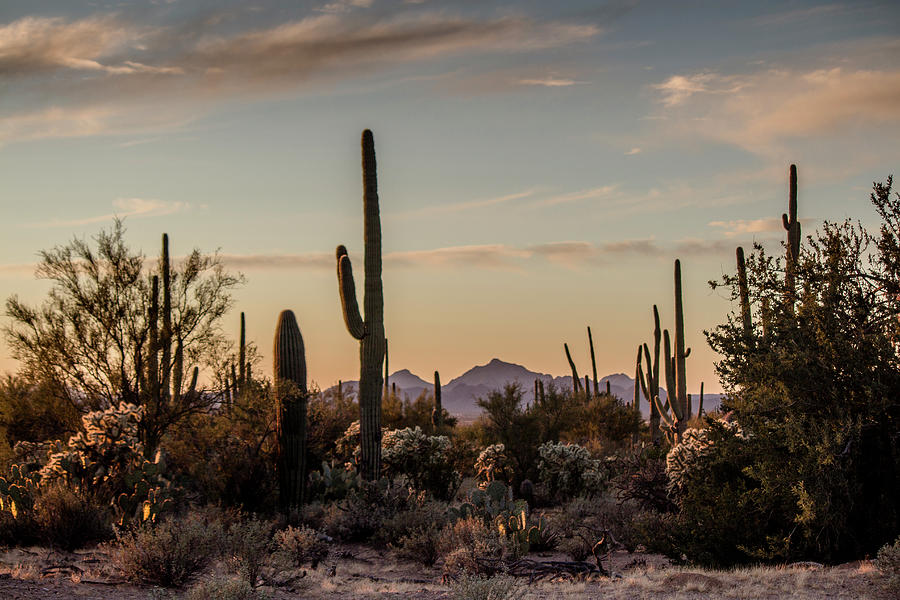 Evening In The Desert Photograph