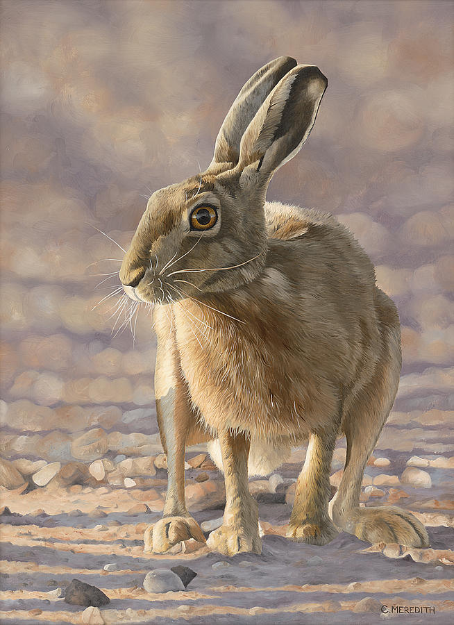 Hare Painting - Evening Light by Clive Meredith