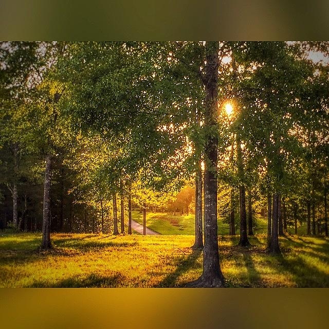 Shadows Photograph - Evening Light  #enlight #snapseed by Joan McCool