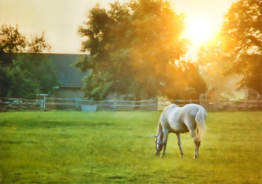 Horse Photograph - Evening Mist by JAMART Photography
