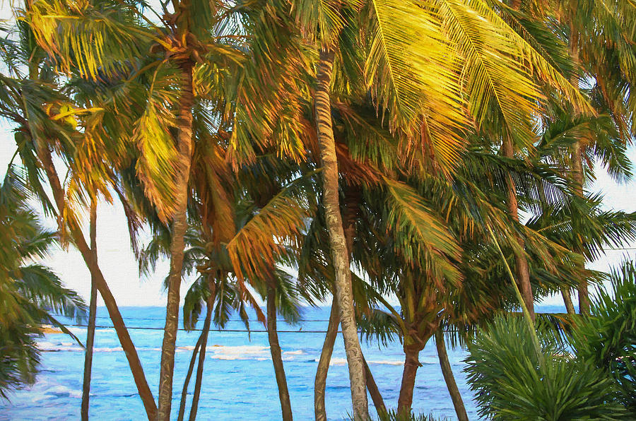 Palm Trees Photograph - Evening Palms In Trade Winds by Bonnie Follett